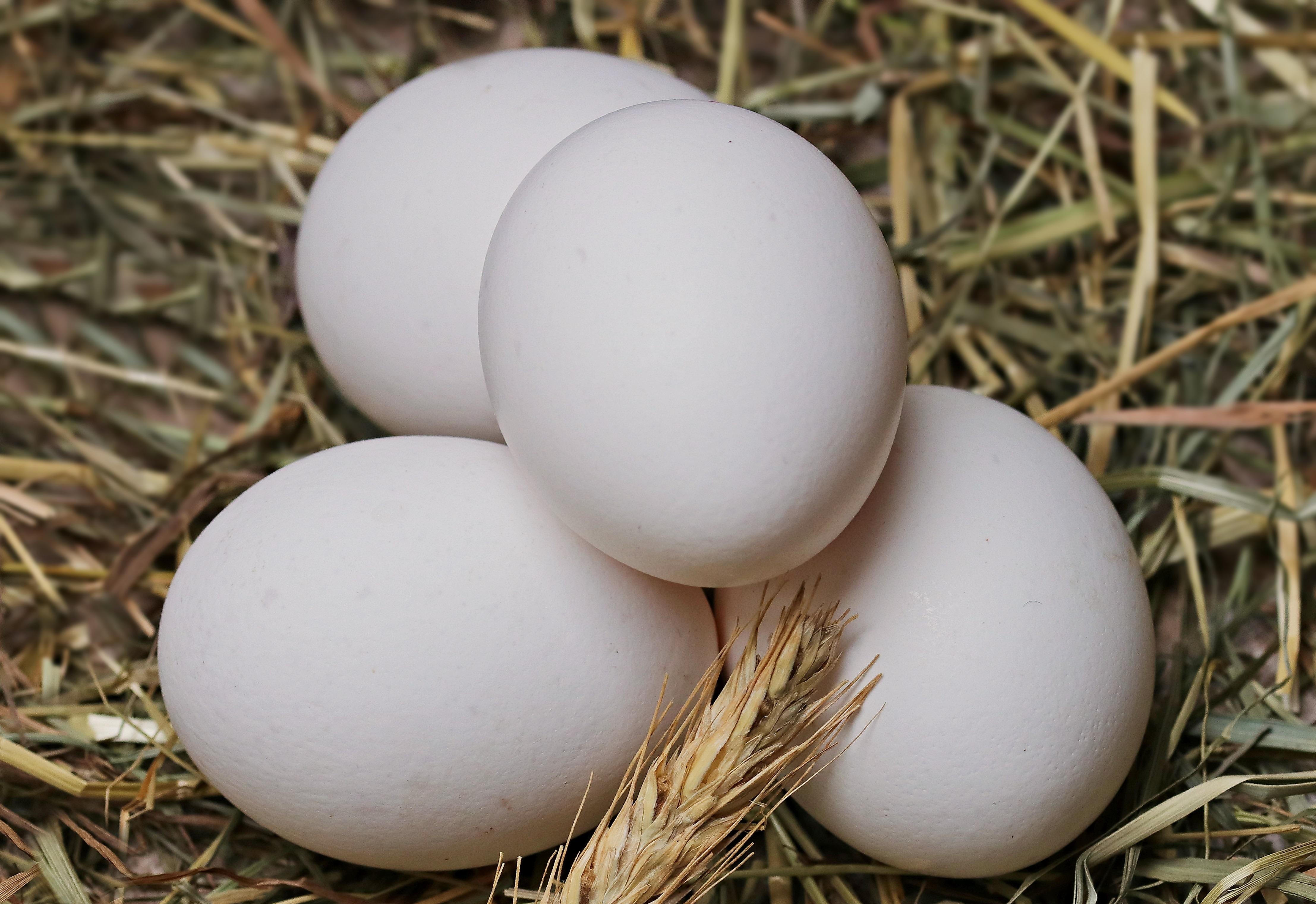 Kiinalaistutkimus: Kananmuna päivässä saattaa suojata sydän- ja verisuonitaudeilta